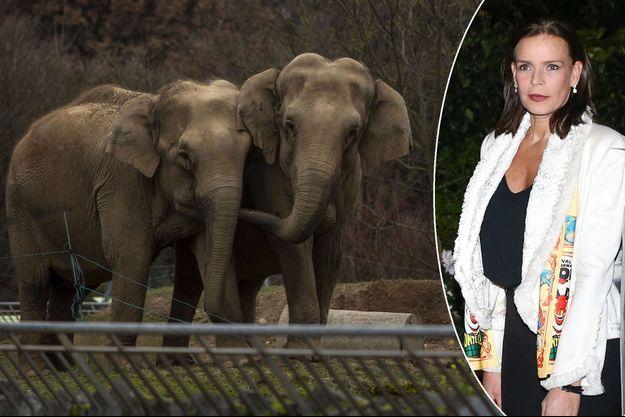Baby et Népal au zoo du parc de la Tête d'Or à Lyon le 7 janvier 2013. La princesse Stéphanie de Monaco le 18 janvier 2018