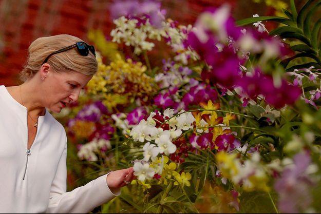 La comtesse Sophie de Wessex au jardin botanique de Peradeniya à Kandy au Sri Lanka, le 1er février 2018