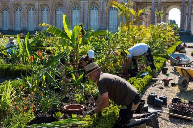 Un parterre africain a été crée au Grand Trianon à Versailles
