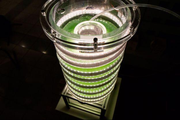 La phytotière de Alg and You, la yaourtière qui produit des microalgues de spiruline.