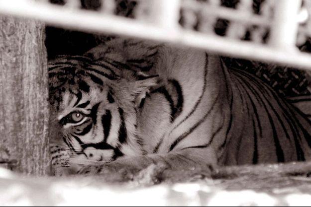 Prisonnier, plaqué contre le sol insalubre, l'un des Tigres du train abandonné en Argentine, lance un regard comme un appel pour implorer le droit à une vie meilleure.