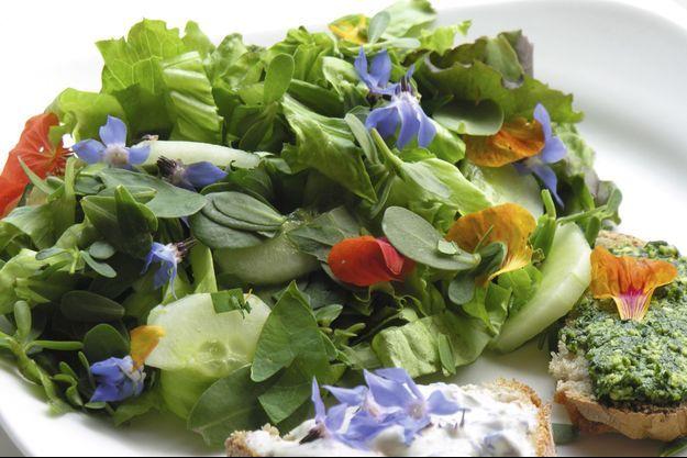 Bourrache et capucines des prés colorent une simple salade.