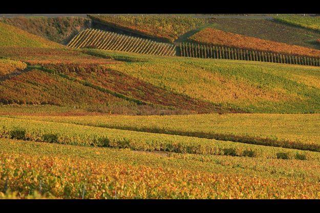 Vignes de champagne en automne aux environs de Champillon.