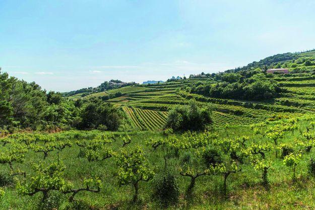 La vallée du Rhône a donné naissance à une multitude de vins blancs et rouges typés et très variés.