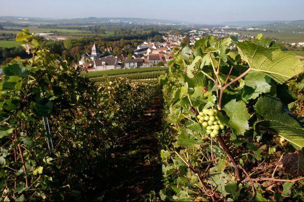Les vignes de Mareuil-sur-Ay. Image d'illustration.