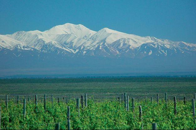 Les vignes de Laurent Dassault au pied de la Cordillière des Andes, un décor grandiose, mais pas seulement. C'est aussi un formidable réservoir d'eau pour irriguer les vignes dans cette région très sèche.