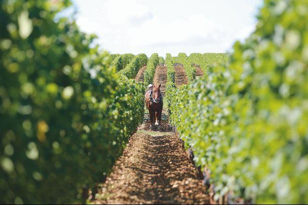 Le principe de cette agriculture : intensifier la vie organique de la vigne et relier celle-ci à la roche-mère (par les racines) et à la lumière (par les feuilles).