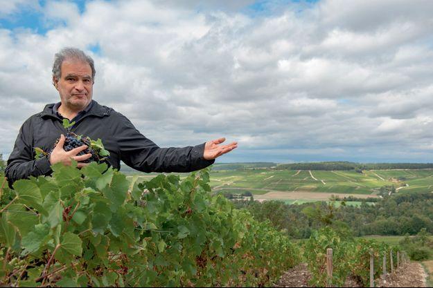 A Celles-sur-Ource, dans l'Aube, dans les 127 hectares de vignes de Thomas Cheurlin.