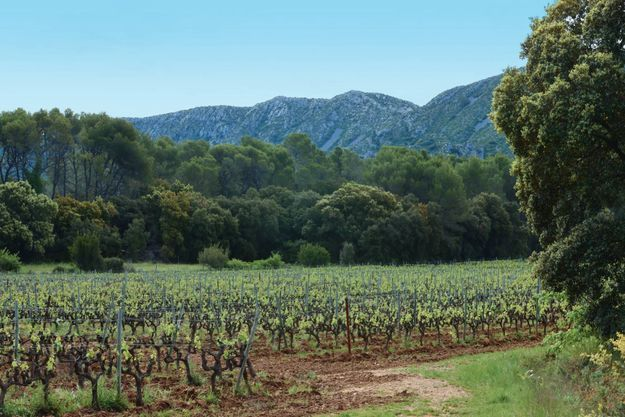 Sur les flancs de la petite montagne célébrée par Frédéric Mistral, le vignoble des Baux-de-Provence. Ici, une des parcelles du domaine Hauvette, en biodynamie.