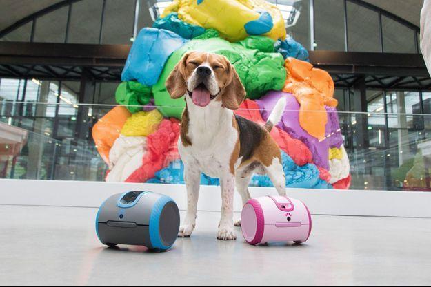 Laïka, un robot interactif qui comprend le chien et éduque aussi le maître.