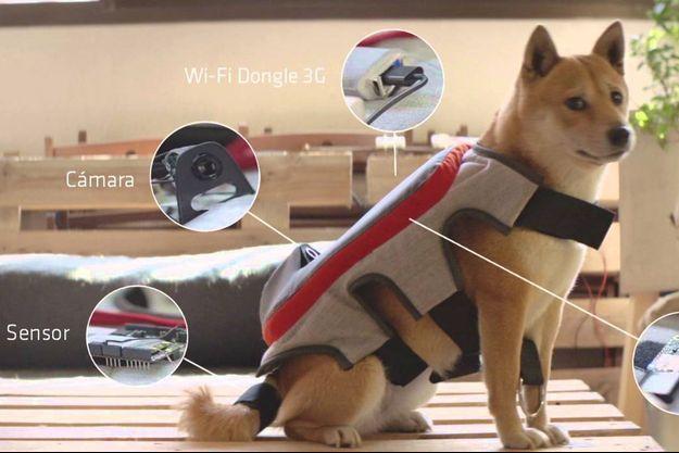 The Posting Tail, le selfie stick pour chien.