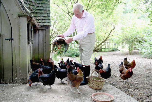 Le futur roi aime nourrir lui-même ses poulets de races Burford Brown et Maran. A Highgrove, le 19 juillet 2018. Une photo prise à l'occasion de son 70e anniversaire.