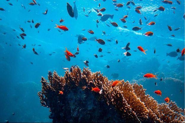 Blancpain, partenaire de la Journée mondiale de l'océan 2021