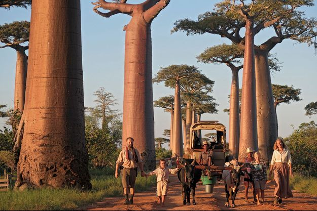 La célèbre allée des Baobabs de Morondava. De g. à dr. : Alexandre, Ulysse, 8 ans, Philaé, 11 ans, Sonia, Naza et Eric, les bouviers.