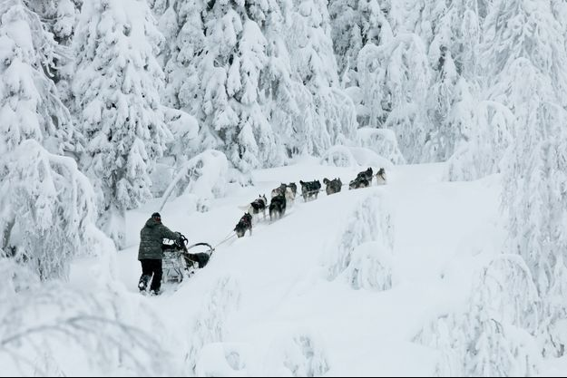 Dans le silence glacé de la plus vieille forêt de Finlande