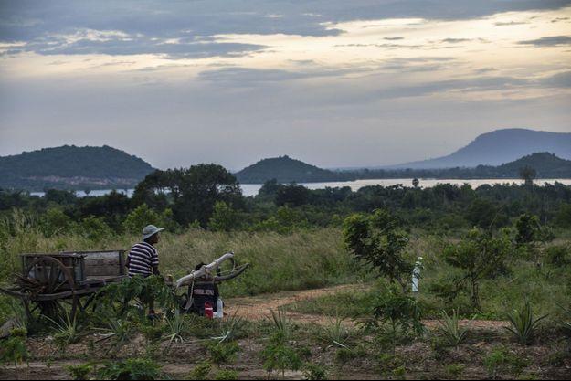 Cultivé entre mer et montagnes, le poivre de Kampot est le premier produit cambodgien à avoir bénéficié d'une IGP en 2010.