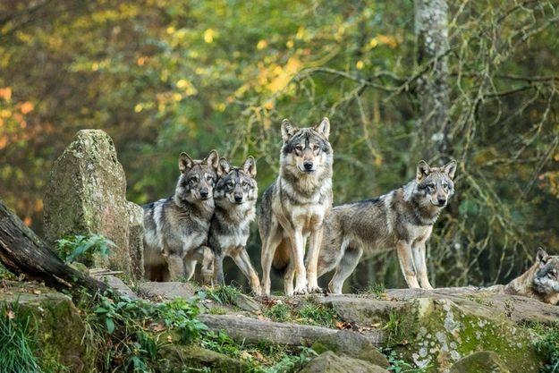 Le Parc Animalier de Sainte Croix héberge 1 500 animaux évoluant en semi-liberté.