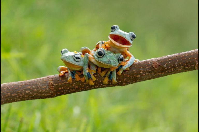 Dans le monde formidable des grenouilles