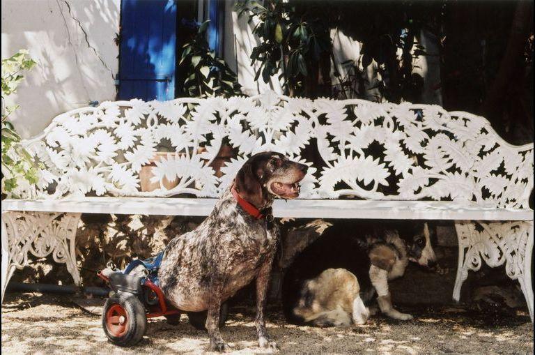 Les chiens de stars
