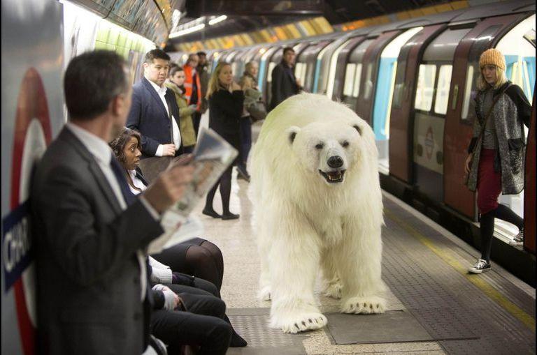 Un ours polaire... dans le métro londonien