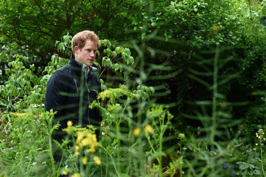 Le prince Harry au Chelsea Flower Show à Londres, le 18 mai 2015