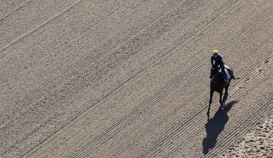Paynter au galop lors d'un entrainement matinal pour le Belmont Stakes, à New York.
