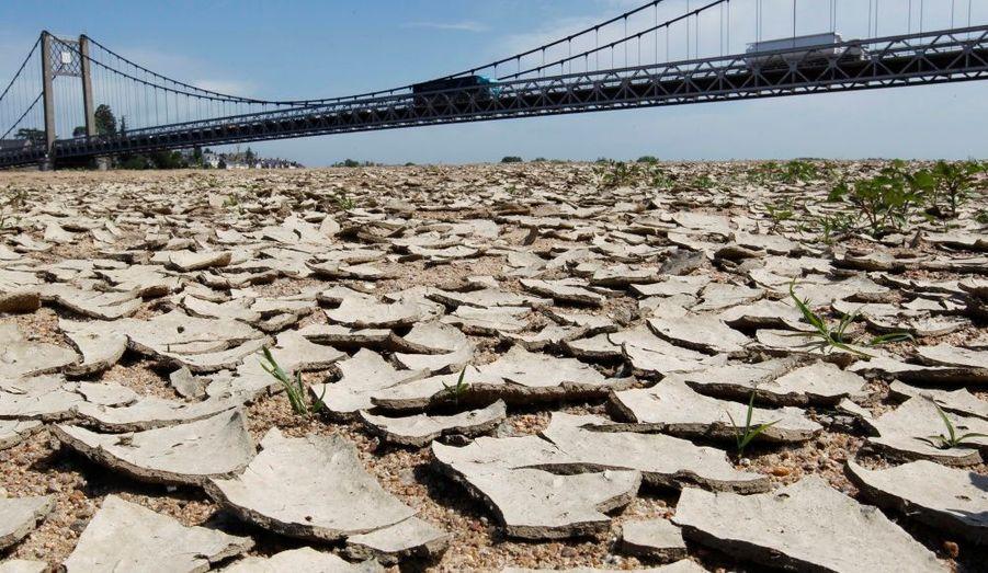 De la terre craquelée et sèche observée dans le lit de la Loire, près du pont Anjou-Bretagne à Ancenis (Loire-Atlantique), dans l'Est de la France. La ministre de l'Ecologie, Nathalie Kosciusko-Morizet a déclaré, lundi, que le pays faisait face à une «situation de crise». Mercredi, les autorités ont imposé des restrictions sur la consommation d'eau dans un tiers des départements de l'Hexagone.
