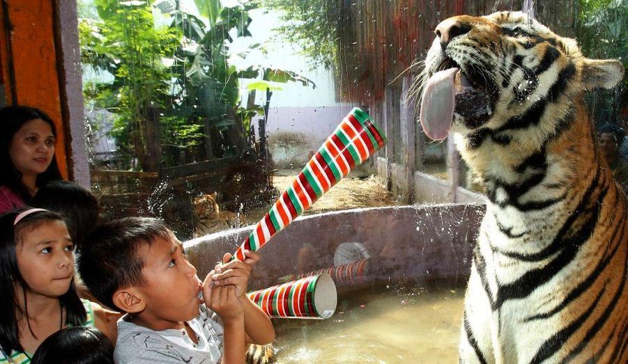 Un enfant s'amuse à effrayer un tigre au zoo de Malabon, au nord de Manille, aux Philippines.