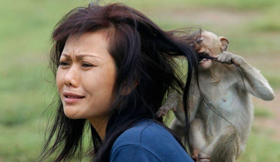 Afin d'attirer plus de touristes, le Monkey Buffet Festival est organisé à Lopburi, au nord de Bangkok, en Thaïlande. Mais les voies du macaque sont impénétrables et celui-ci préfère les cheveux d'une jeune femme à la nourriture accumulée.