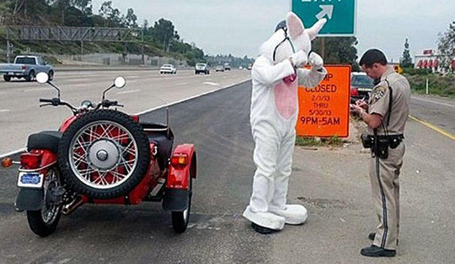 ...n'a pas tué un chasseur, mais a été arrêté par la police californienne à La Mesa pour non-port du casque. Ce dernier, a-t-il expliqué, n'était pas compatible avec son déguisement de lapin.