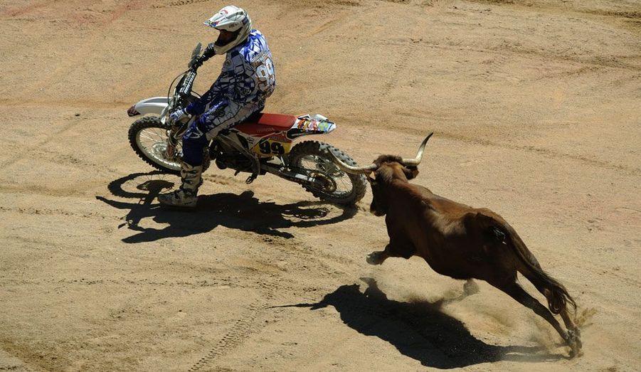 A Pampelune, pour les fêtes de la San Fermin, il arrive même que, pour le spectacle, des motards se mesurent aux taureaux.