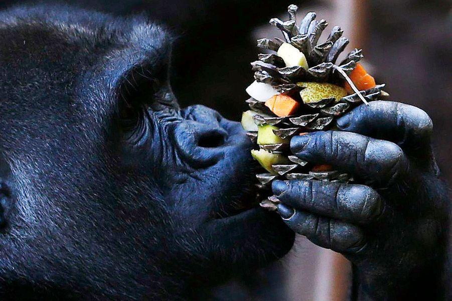 Dans un premier temps, les animaux vivront avec la famille Caillé.