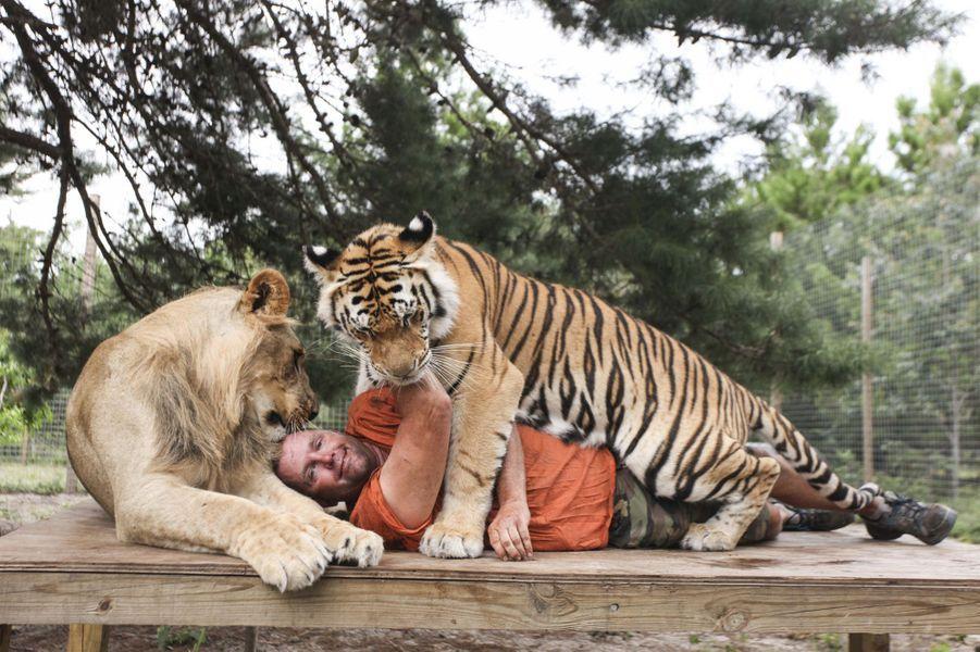 tigres lions l opards des f lins dans son jardin. Black Bedroom Furniture Sets. Home Design Ideas