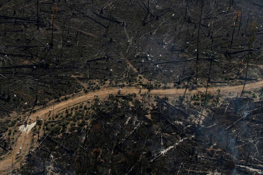 De nombreuses terres brûlées
