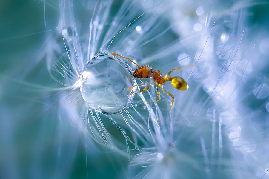 La goutte d'eau et la fourmi