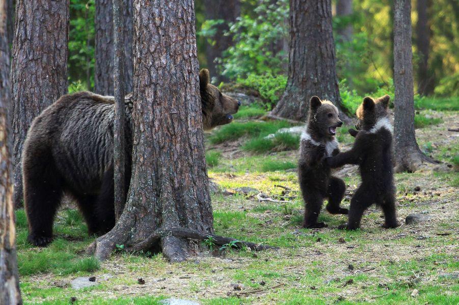 La ronde des oursons