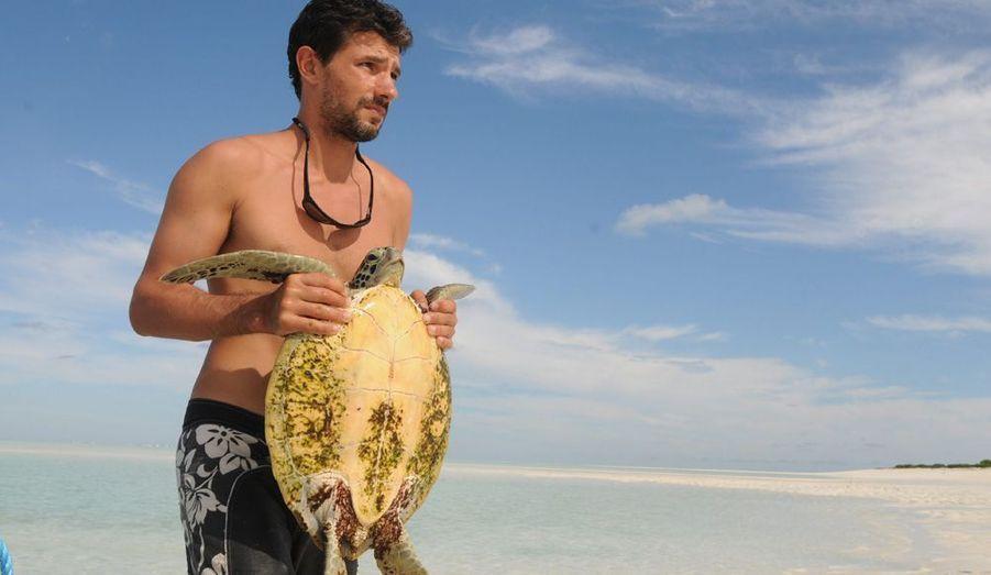Jérôme Bourjea capture, mesure, pèse et bague les tortues immatures dans le lagon de l'île.