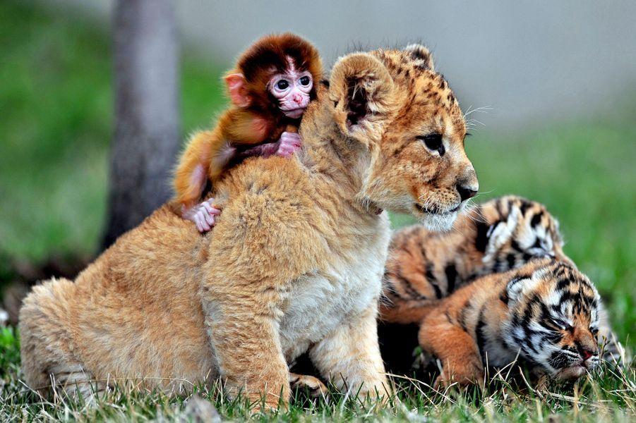 Fabuleux L'insolite amitié des animaux OE53