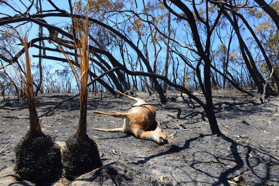 Le 4 janvier, l'Australie Méridionale a connu ses pires incendies de forêts depuis trente ans. Le feu, parti des Mount Lofty Ranges, une chaîne de montagnes située à l'est d'Adélaïde, a ravagé le bush, détruisant une vingtaine de maisons. Les vents forts et les fortes températures ont ainsi ravagé plus de 11 000 hectares de forêts dans les collines d'Adélaïde, une région agricole qui compte environ 40 000 habitants. Un grand nombre de chats et de chiens ont trouvé la mort lorsqu'une pension pour animaux a été ravagée.