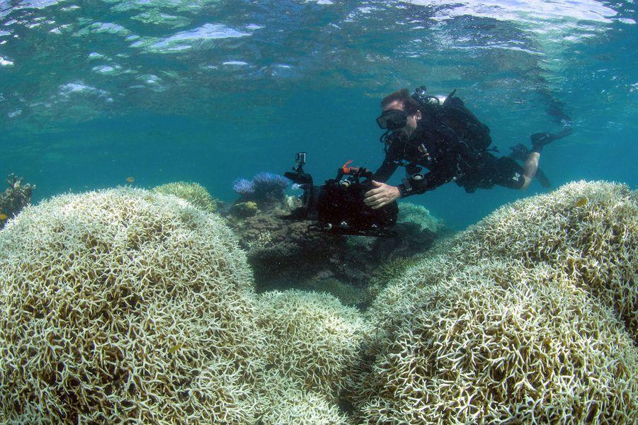 Les coraux de la Grande barrière de corail deviennent blanc à cause du réchauffement climatique