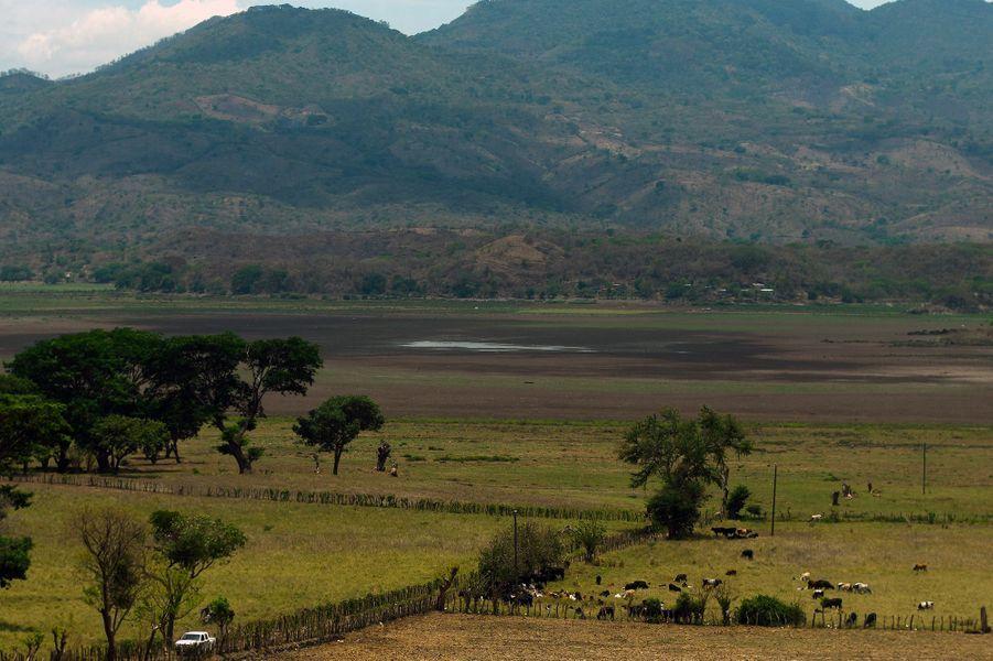 Des coquillages asséchés qui émergent du sol craquelé par le soleil :c'est tout ce qui reste de la lagune d'Atescatempa au Guatemala.
