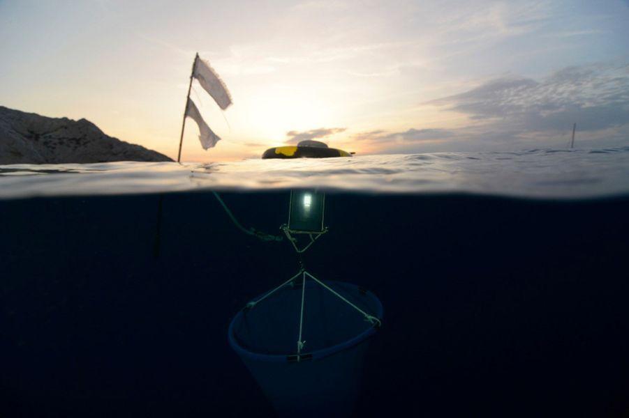 Etape 1 du projet : collecter des larves dans la mer.