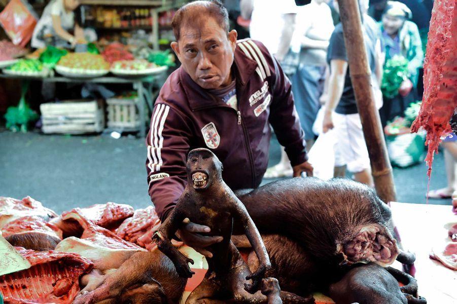 Sur le marché traditionnel de Tomohon (Indonésie) : macaques noirs, serpents, rats, pythons, chauve-souris jonchent les étalages... On trouve aussi des chiens vivants enfermés dans des cages.