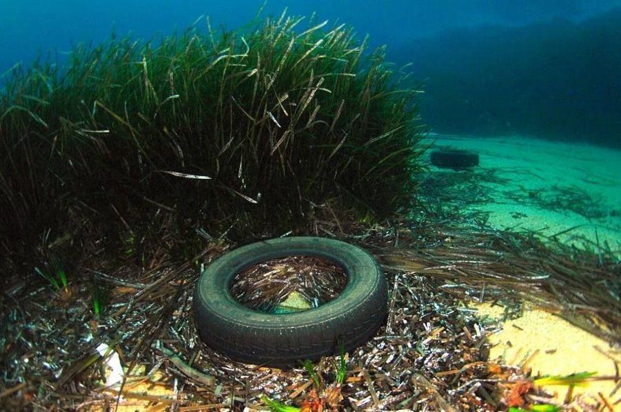 """Antonin Guilbert - Parc national de Port-Cros: """"Les déchetteries, tout le monde connait. Surprenant de découvrir de tels déchets sous l'eau. Des campagnes de nettoyage des fonds marins sont régulièrement organisées par de Parc national de Port-Cros, avec le concours de bénévoles. Merci à eux"""" - Provence-Alpes-Côte d'Azur"""