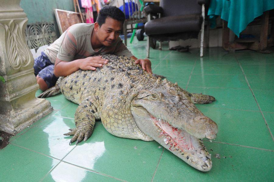 Kojek, le crocodile.