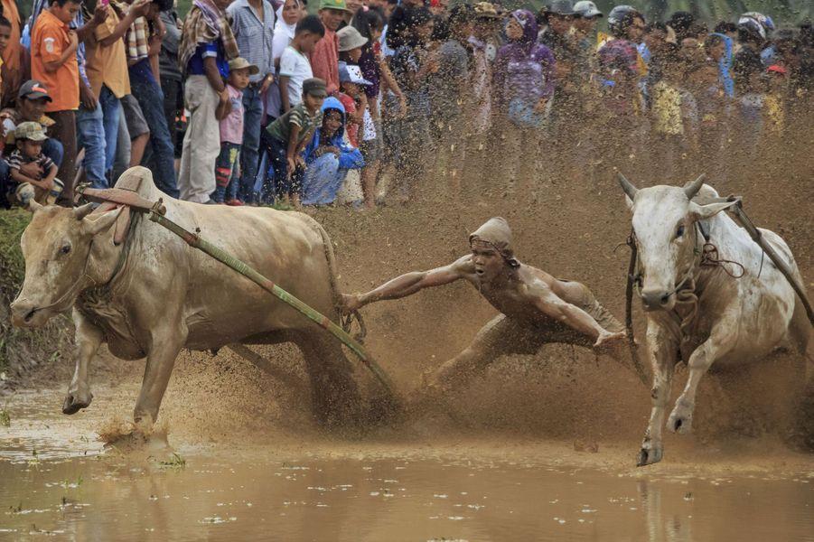 Dans la boue du Pacu Jawi