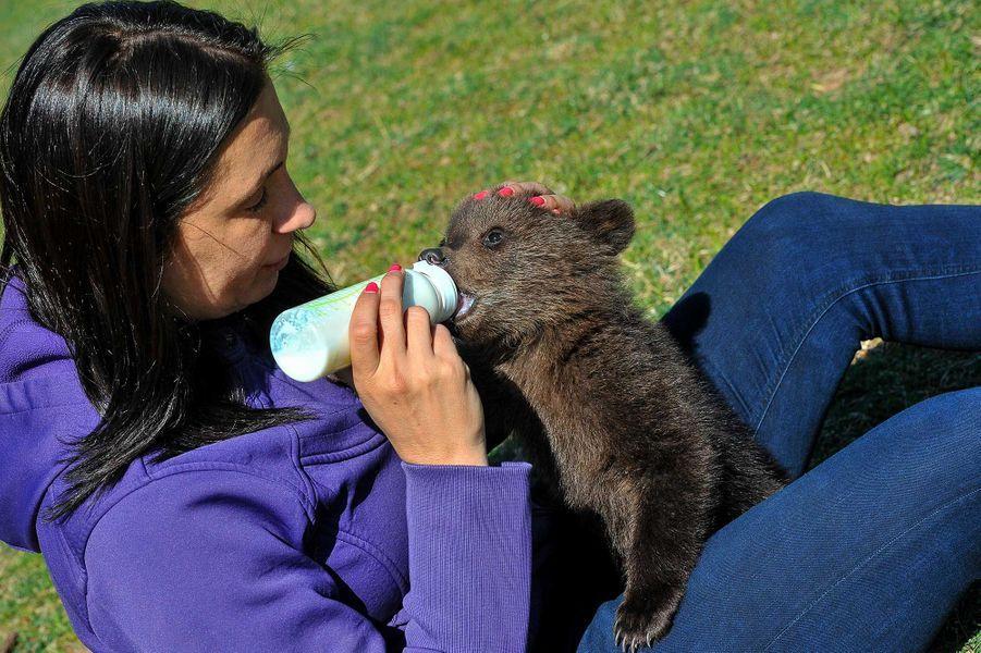 Les oursons sauvésMasha et Brundo