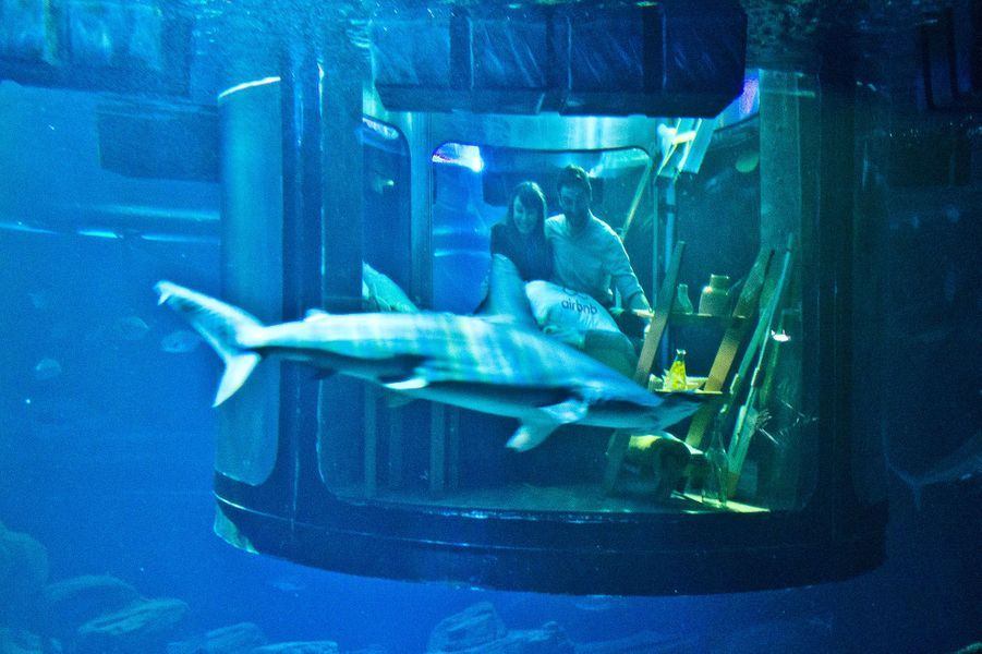 La chambre de verre plongée dans l'aquarium des requins