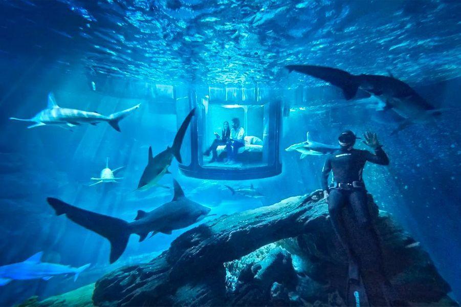 La chambre à coucher de verre au milieu des requins
