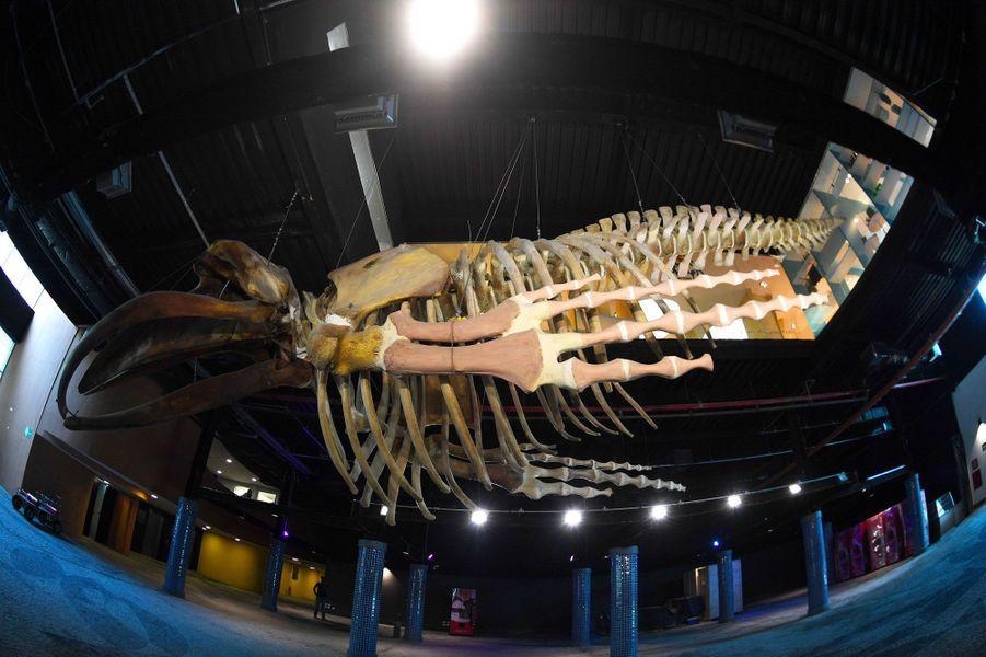 A l'entrée se trouve le squelette de baleine